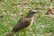 AVES DE URUGUAY / algunas de estas aves no las he podido identificar