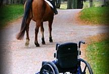 Equine therapy/RDA