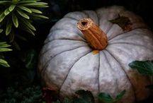 Autumn Squash & Jacks / by Nancy D.