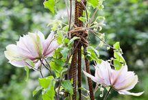Garden / by Signe Bruun