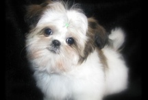 what my Noah looked like as a puppy / by Joann Disalvo
