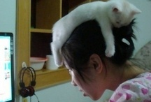 Cat Hat / Apparently, this is enough of a phenomenon to create this board. / by Ms. Grammar