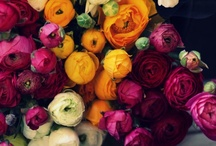 Say It With Flowers / Flowers are a gift from nature. They beautify any space, and can uplift and inspire you. Here are a few of my favorite flowers, bouquets and floral arrangements #flowers / by Epreneur TV