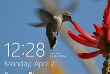 Windows 8 / by Nancy Banning