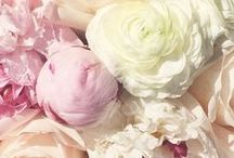 COLOR: PASTELS / by Lynda | Focal Point Styling