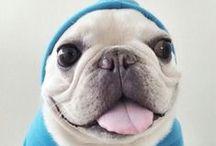 -doggi-