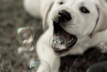 Pups & Cuteness / by L. Jade Archuleta