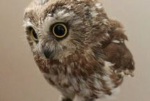 Cute Owls / Thank you for following. Have fun pinning.