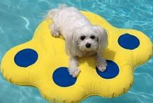 Summertime Items For Your Pampered Pooch