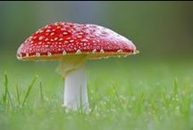 Amazing Fungi / The Best Fungi on Pinterest!  Thank you for following. Have fun pinning.