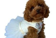 Wedding Dog Clothing and Accessories
