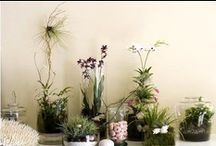 The Indoor Gardener / by Knits & Crafts