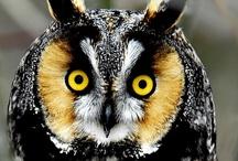 Owls / by Linda Uhl