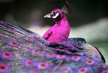 Dream Colour Inspiration / by Stephanie Farrell