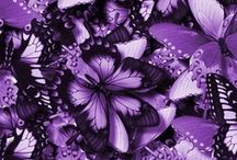 The Color Purple / One of my favorite movies and one of my favorite colors.  / by Michelle Kinder