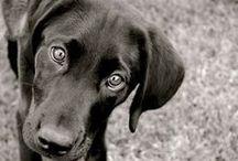 Puppy Love / by Katie Marrocco