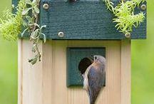 Bird Living