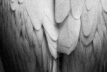 angels / by Jackie Barnes