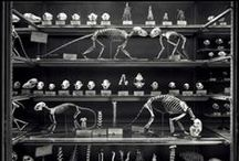 Curio Cabinet / The macabre, strage, interesting, curious and bizarre