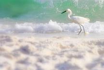 Beach and Ocean / I love the ocean!
