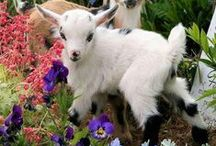 Cute Animals / by Patricia Hewitt