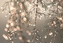 Winter / by Aleksandra Konwa