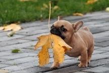 "Autumn 2 / ""Autumn, the year's last, loveliest smile."" ---William Cullen Bryant"