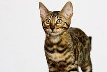 Cats that are best for people with allergies