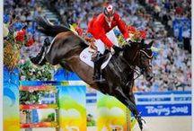 Exquisite Horses