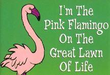 fantastic flamingos / by Lori Cello