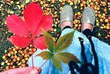 Autumn ♥ Halloherbst13  / Collection of beautiful autumnpics  / by heimatPOTTential