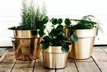Pots, plants and peonies. / All sorts of green plants and flowers for the home.
