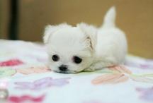 cute! / by Leah
