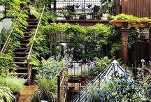 Garden / by Leza