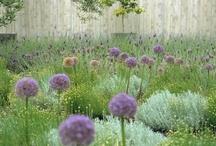 Gardens / by Kim Koloski