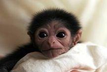 monkey stuff / by Kim Koloski