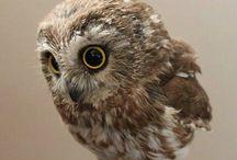 Owl Love!