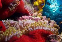 The Seven Seas / Ocean Life