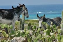 Aruba Nature / Aruba's Flora and Fauna ...