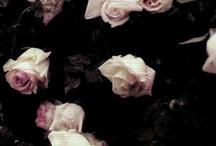 rose / by Diane