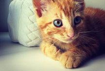 Felix, my cat