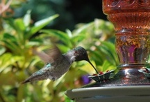 Hummingbird Migration Photo Contest 2013 / A collection of images submitted by Perky-Pet® #bird lovers. Welcome to the #beauty that is #hummingbirds!