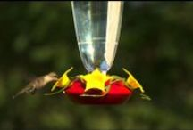 Bird Feeders In Action / Take a peek at our feathered friends using Perky-Pet® #birdfeeders in action!