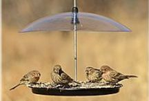 New & Improved Perky-Pet® Bird Feeders / You talked and we listened! Some of your favorite Perky-Pet® #birdfeeders are back and better than ever!