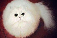 I ❤️ cat