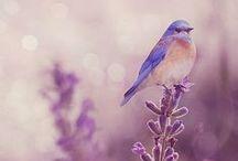 Birds&Flowers.