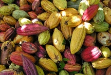 At the Source / From San Francisco to Peru and beyond... This is where TCHOchocolates originate, how we source the best cacao beans on the planet, and change the world while doing it.