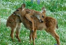 Too Cute Critters! / I couldn't resist, I am a true animal lover :-)