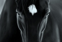 Horses / by Isabelle Fimes