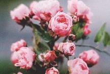 Botany &  N A T U R E / by Alexa-Rae Barnes